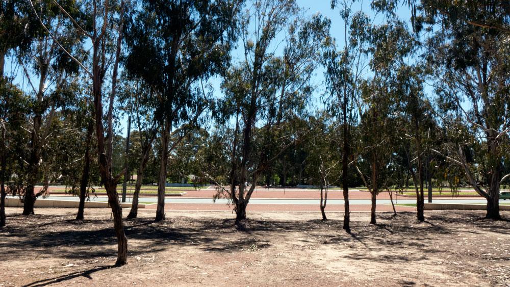 Anzac-trees06
