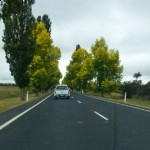 Brdwd-Trees-P1020948