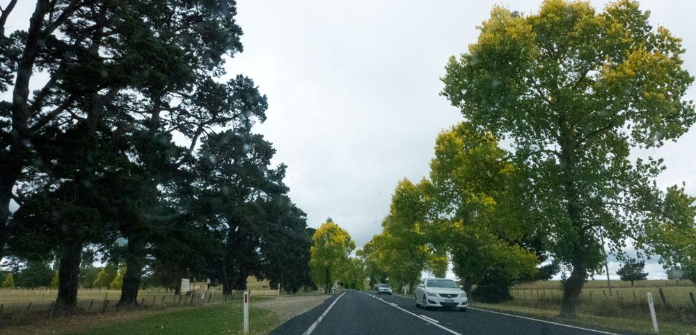 Brdwd-Trees-P1020990