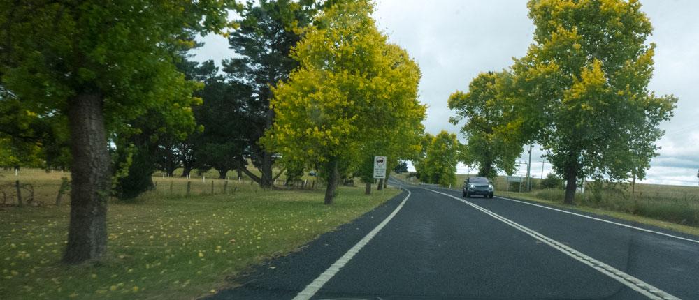 Brdwd-Trees-P1020991