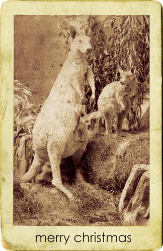 merry-kangaroos