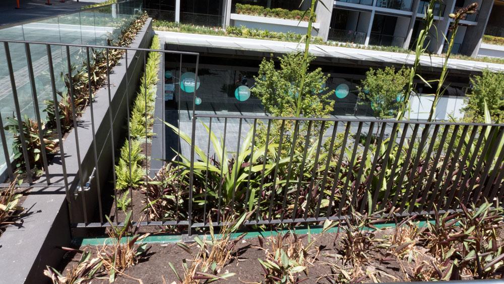 plants-P1020645