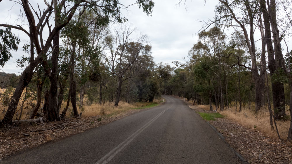 Road-trees-P1030173
