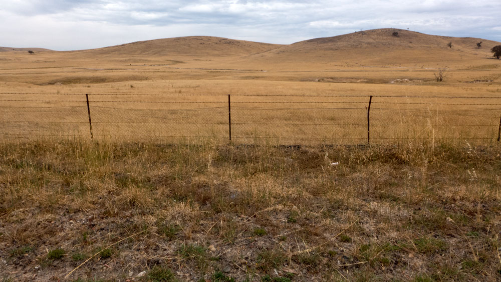 field-P1030188