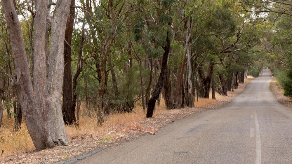 road-trees-P1030176