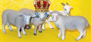 crown-sheep
