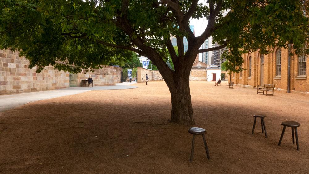 06-tree-P1020711