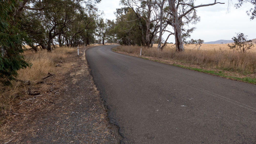 road-trees-P1030185